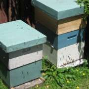 BEEKEEPING -  Thursdays